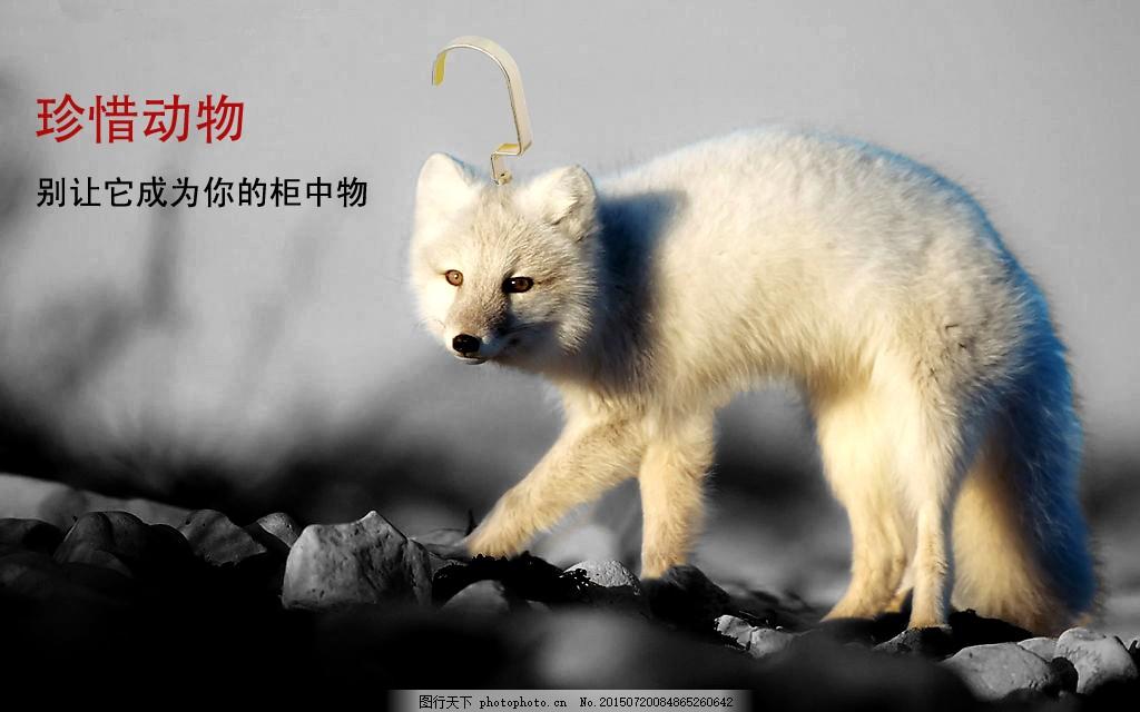 保护动物珍惜动物禁止皮草公益海报