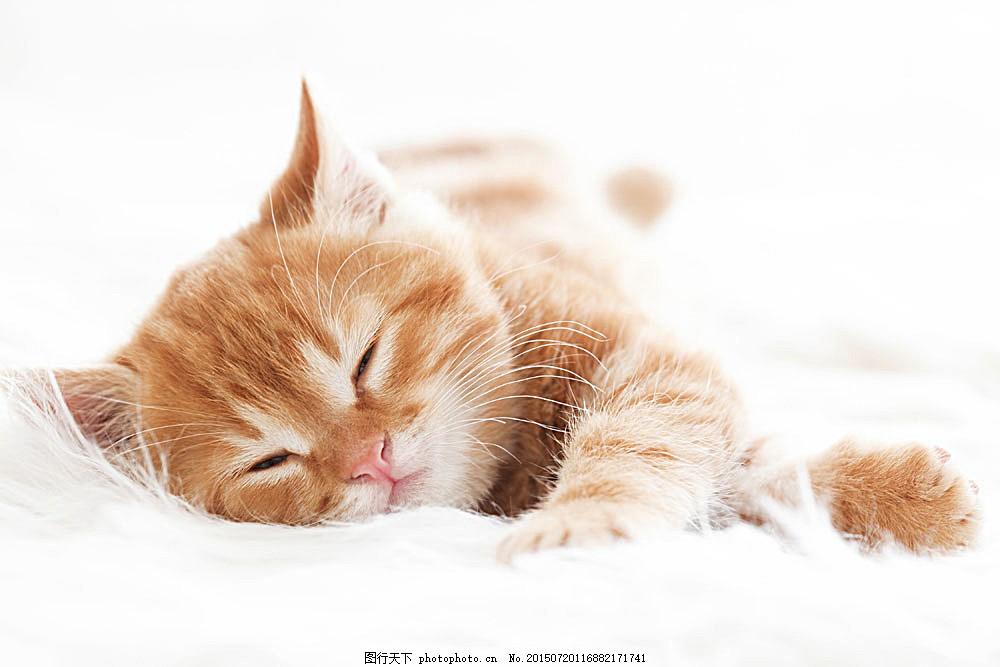 睡着的小猫 猫咪 小猫 宠物 猫科动物 野生动物 动物世界 陆地动物 生
