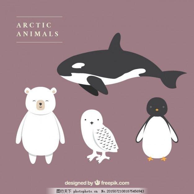 可爱的北极动物 自然 动物 冬天 猫头鹰 可爱 熊 企鹅 鲸鱼 冷 可爱的