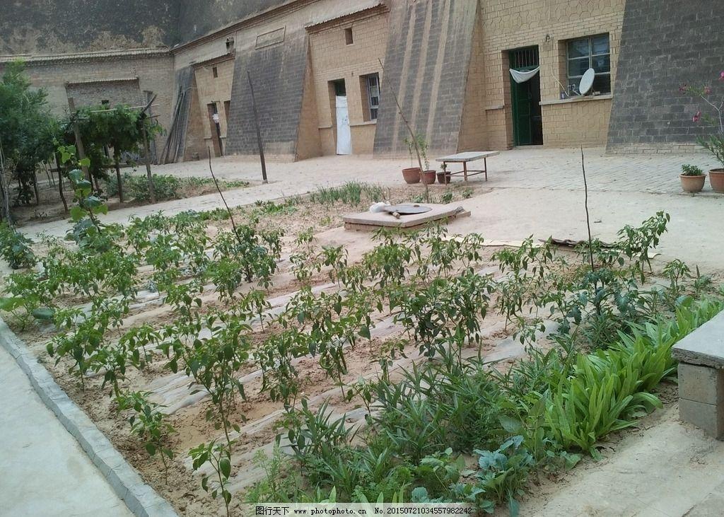 农家小院菜园图片