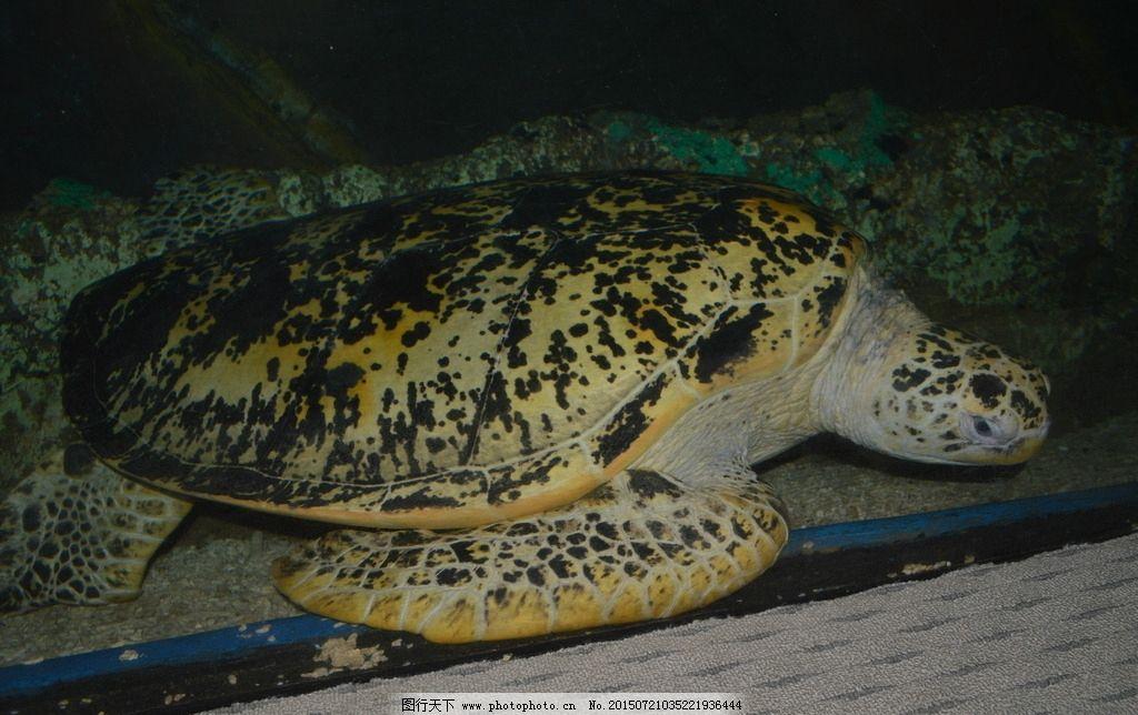 唯美 可爱 动物 野生动物 海龟 摄影 鱼类海龟特写 棱皮龟 蠵龟 玳瑁