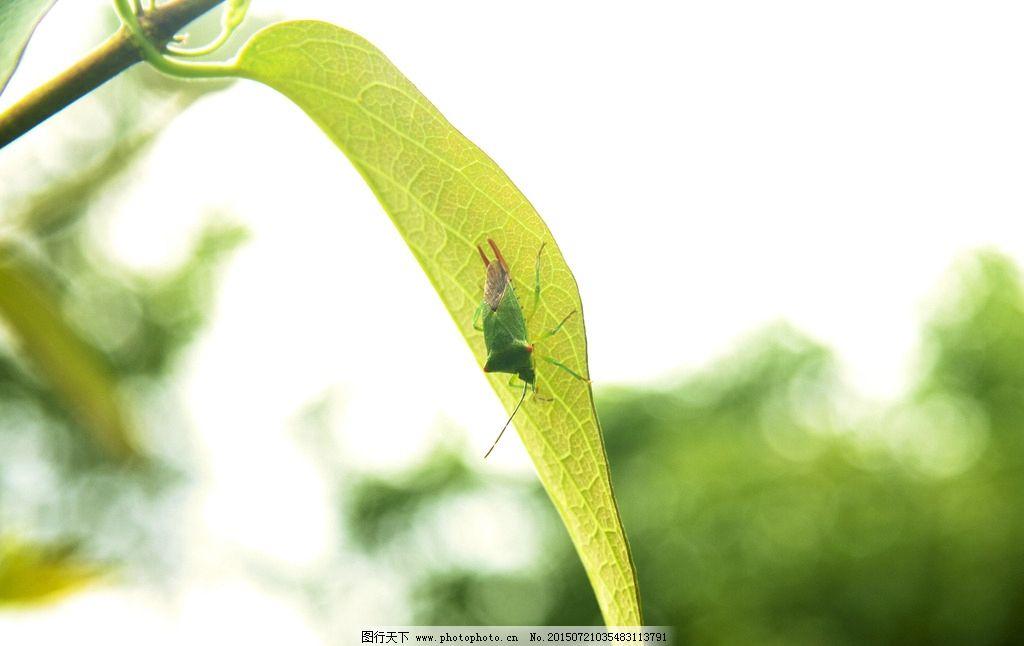 昆虫生活照图片