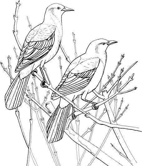 鸟类素描 动物素描 动物手绘画 设计素材 动物专辑 素描速写 书画美术图片
