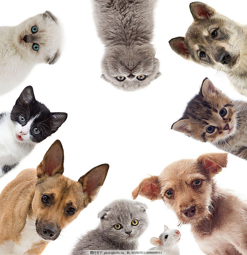 可爱宠物猫咪小狗