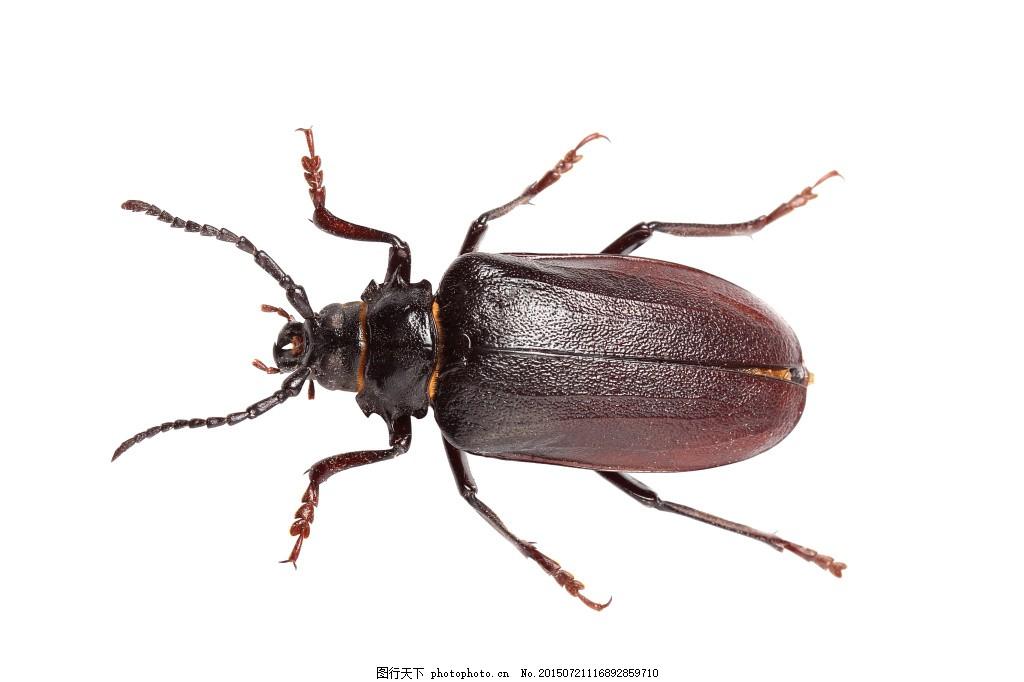各种昆虫动物高清图片 (6)