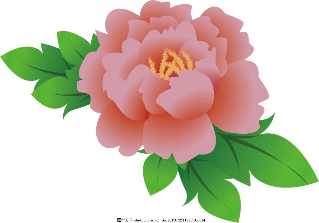 牡丹花 矢量 高清 白色