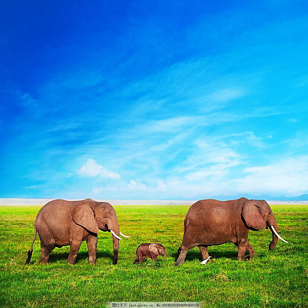 草地上的大象 蓝天 白云 动物 环境家居 图片素材 青色 天蓝色