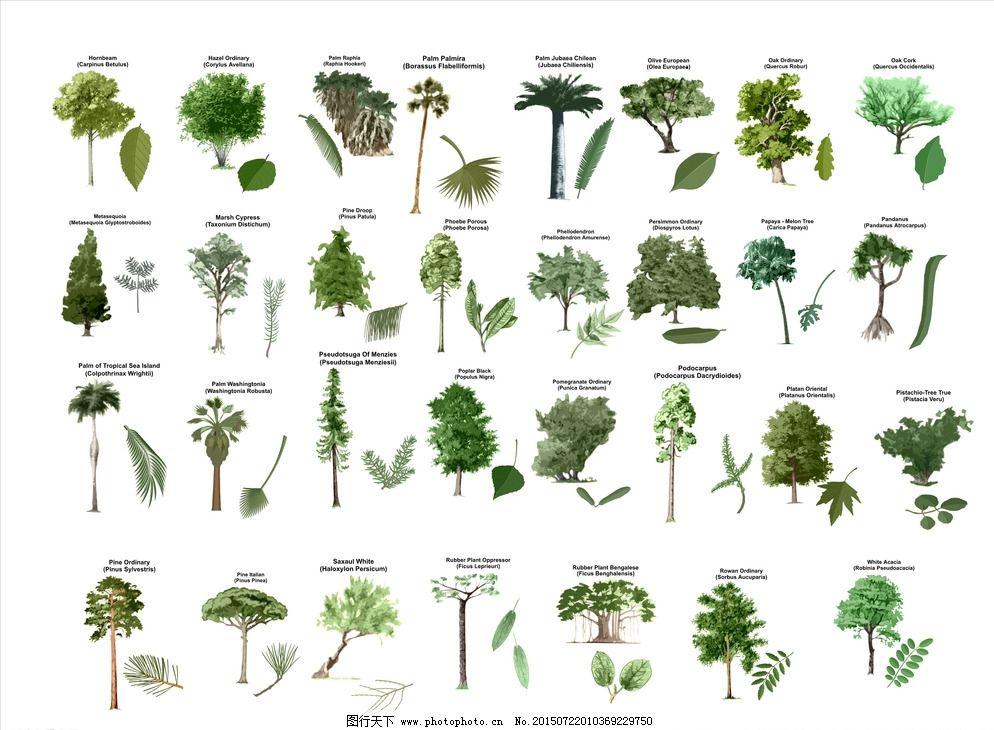 手绘植物图片_园林景观_装饰素材_图行天下图库