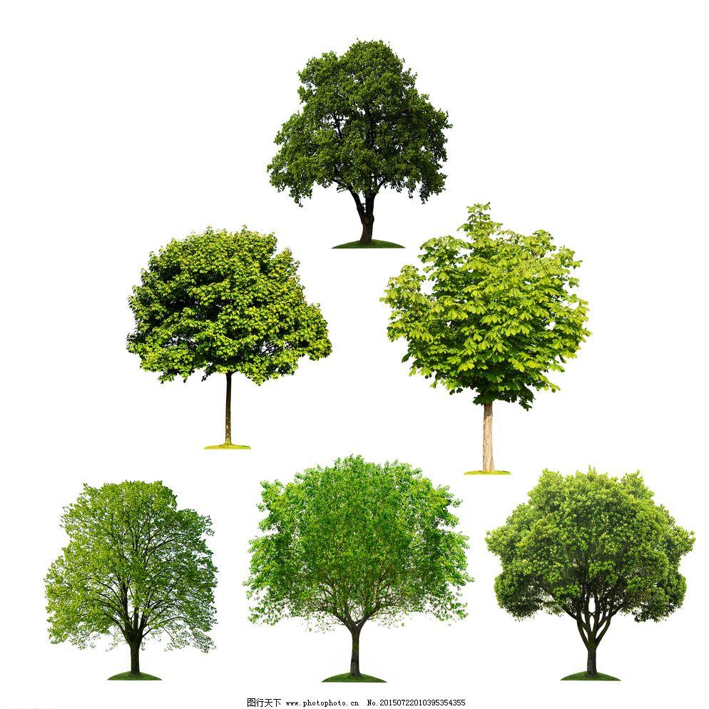 景观设计 绿化 设计 树