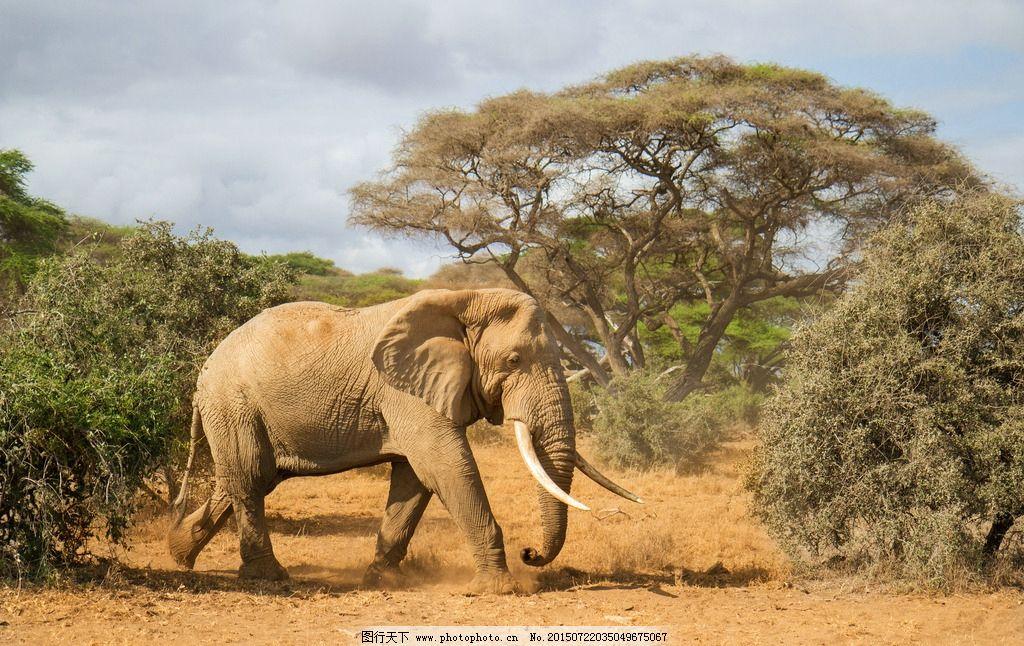 大象 动物 野生 草原 摄影