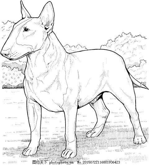 狗 动物素描 动物手绘画 设计素材 动物专辑 素描速写 书画美术