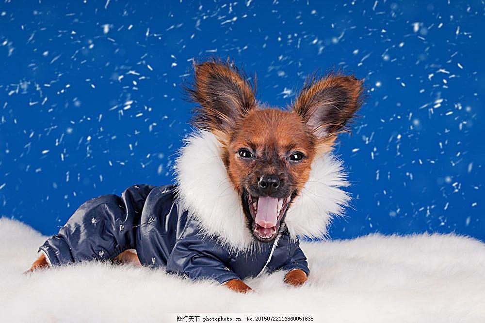 穿衣服的小狗 圣诞动物 雪花 小狗 狗狗 宠物狗 可爱动物 动物世界