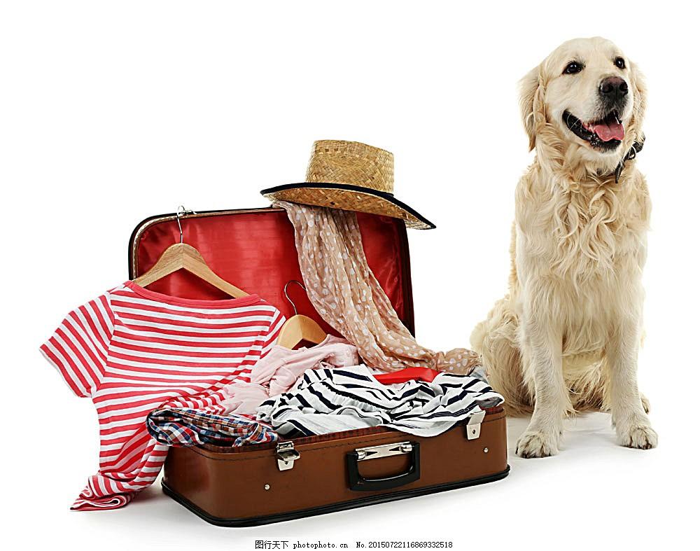 带着箱子的狗 动物 野生动物 动物世界 帽子 衣服 陆地动物 生物世界