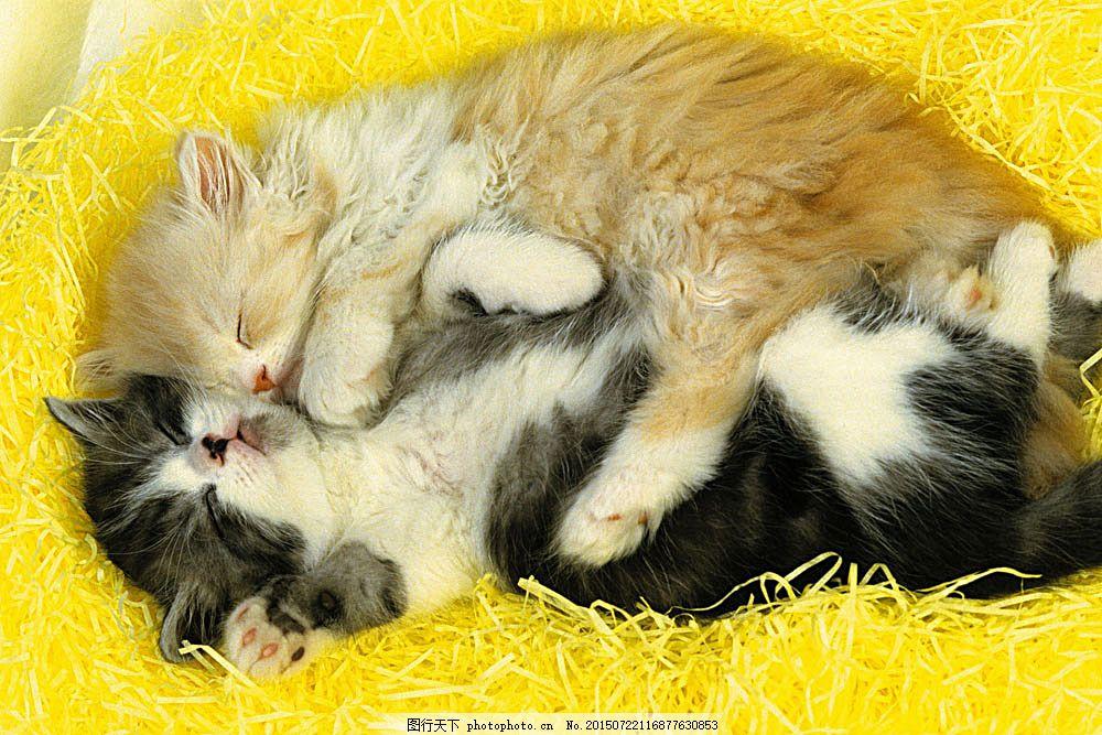 睡觉的猫咪 动物世界 可爱 小动物 宠物 小猫 陆地动物 生物世界