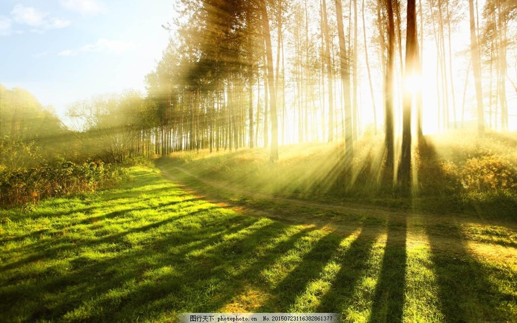 大自然森林