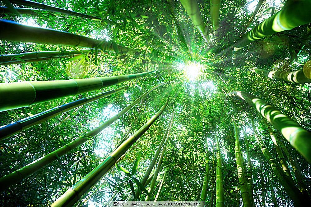 竹林仰视摄影图片