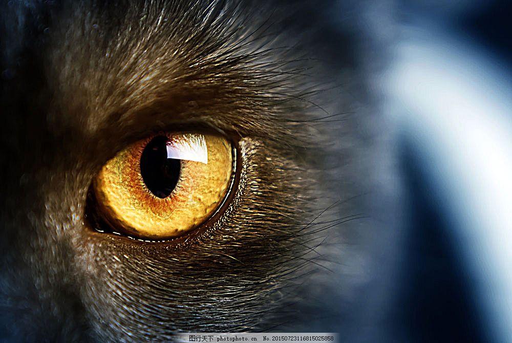 猫眼睛 猫咪 小猫 宠物猫 可爱动物 动物世界 动物摄影 陆地动物
