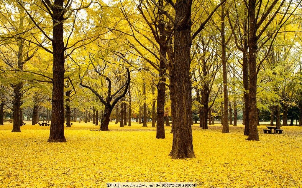 高清树林免费下载 高清 金秋 落叶 高清 落叶 金秋 图片素材 风景