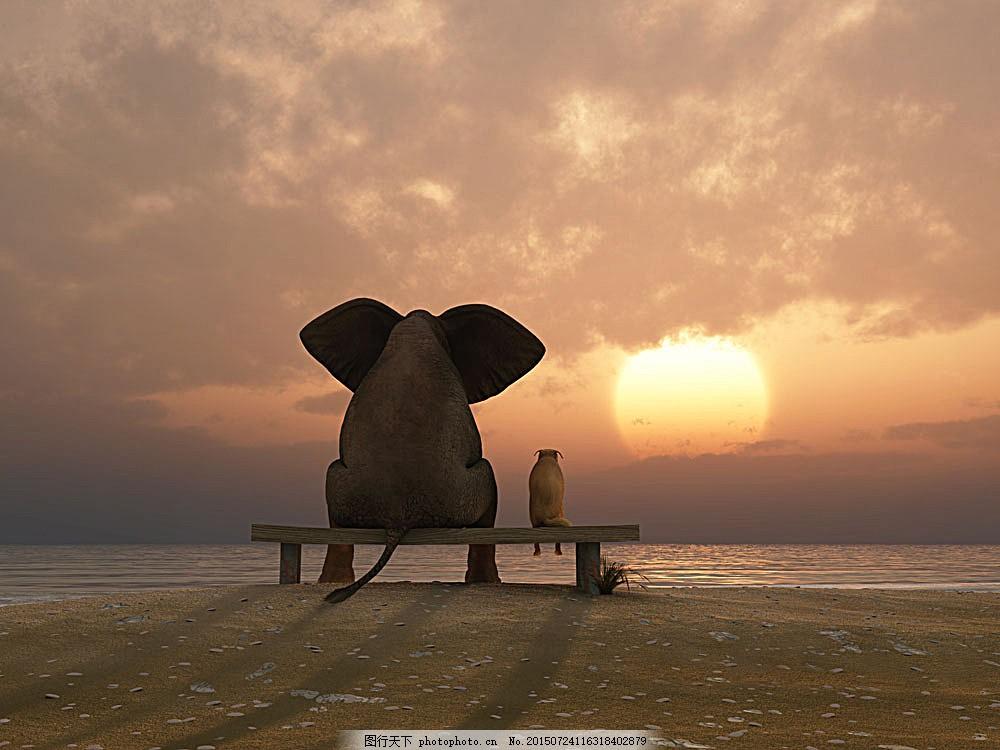 看日出的动物 大海 海边 海水 浪花 海浪 海滩 沙滩 太阳 日出 夕阳