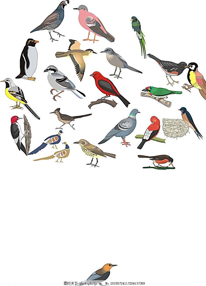 鸟手绘图图片