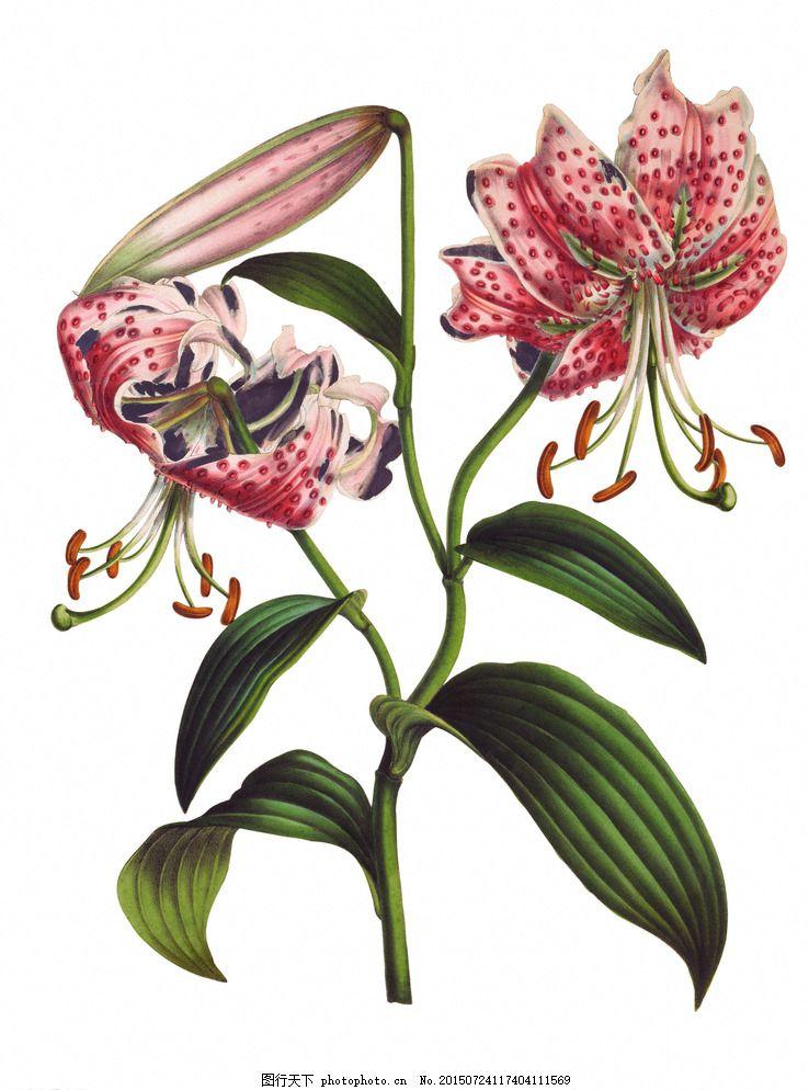 热带雨林花 花 植物 树叶 热带 树枝 红色 设计 生物世界 花草 300dpi