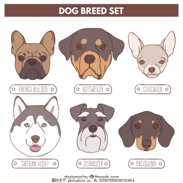 各种狗 房子 一方面 狗 自然 动物 手绘 宠物 斗牛犬 法国 绘制的