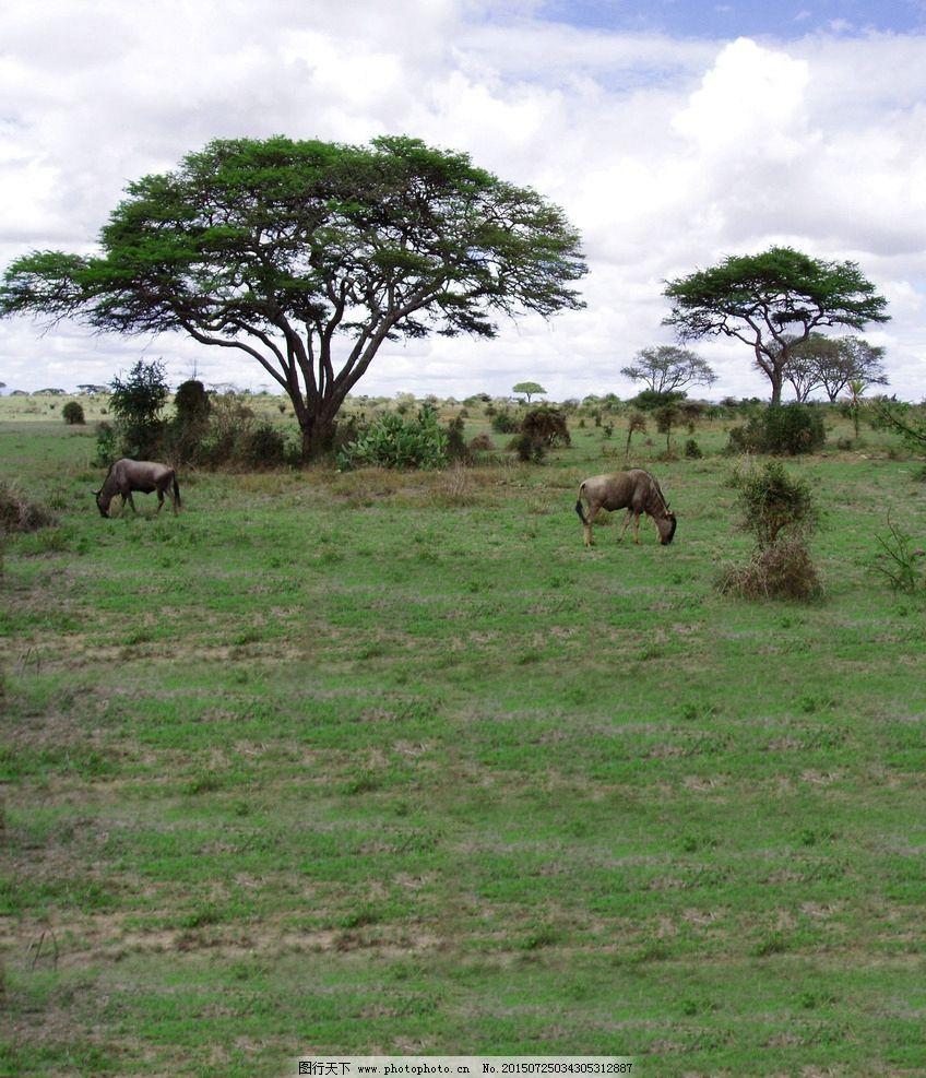 大草原 动物 马 树木 蓝天 白云 摄影 旅游摄影 其他 500dpi jpg