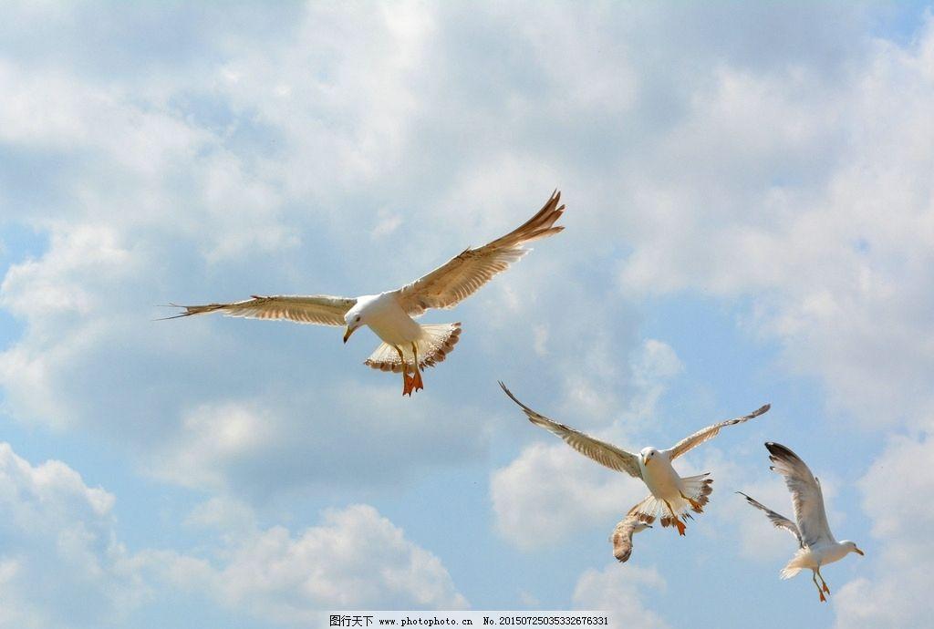 海鸟 广阔 天空 摄影 海鸥  摄影 生物世界 鸟类 72dpi jpg