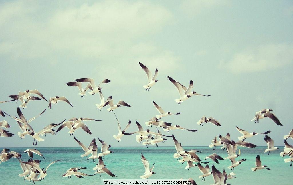 海鸟 大海 广阔 天空 摄影 海鸥  摄影 生物世界 鸟类 72dpi jpg