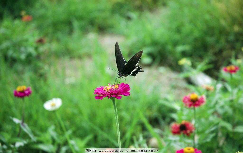 动物 植物 花卉 花朵 花草 摄影 特写 景色 景点 景观 景区 风光 风景