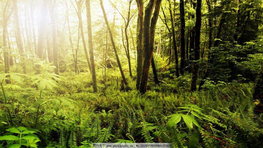 森林素材免费下载 神秘深林 热带深林 草树木 图片素材 背景图片