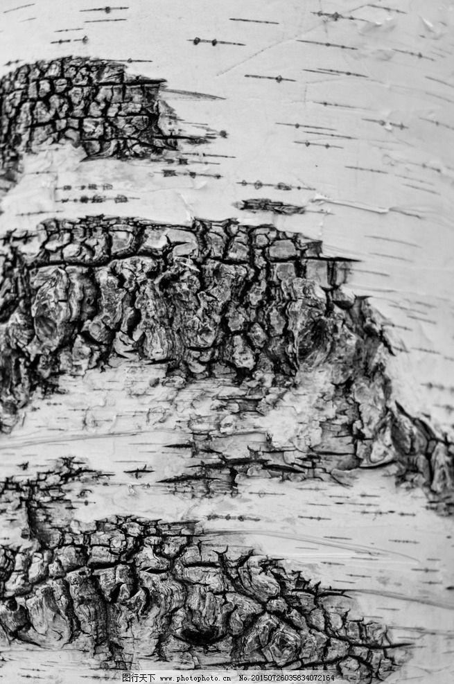 白桦树皮图片