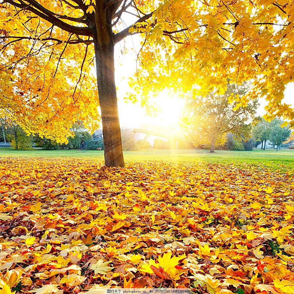 秋天树木树叶阳光风景