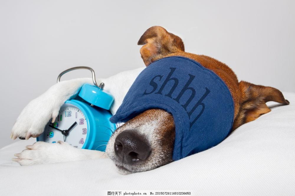 抱着闹钟睡觉的小狗