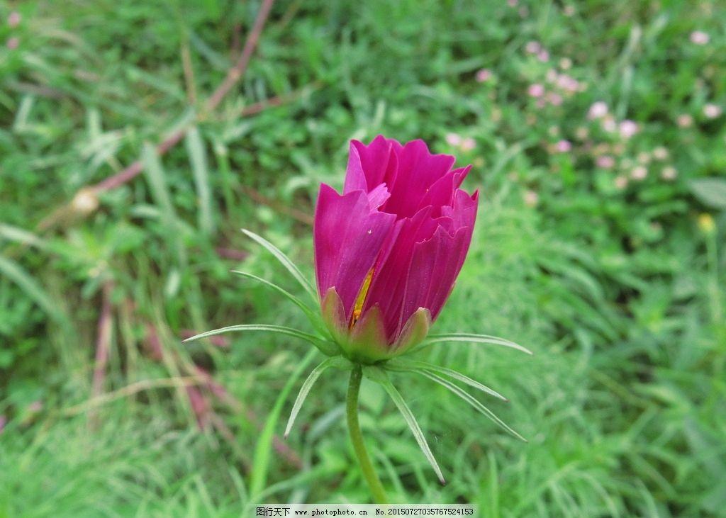 花朵 红色花朵 单朵小花 红色小花 微距花朵 风景 摄影 生物世界 花草