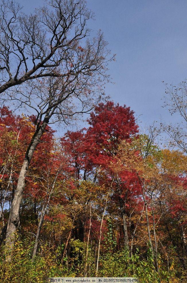 秋天的森林 森林的秋天 秋景 漂亮的秋天 唯美的秋天 秋天的树木 摄影