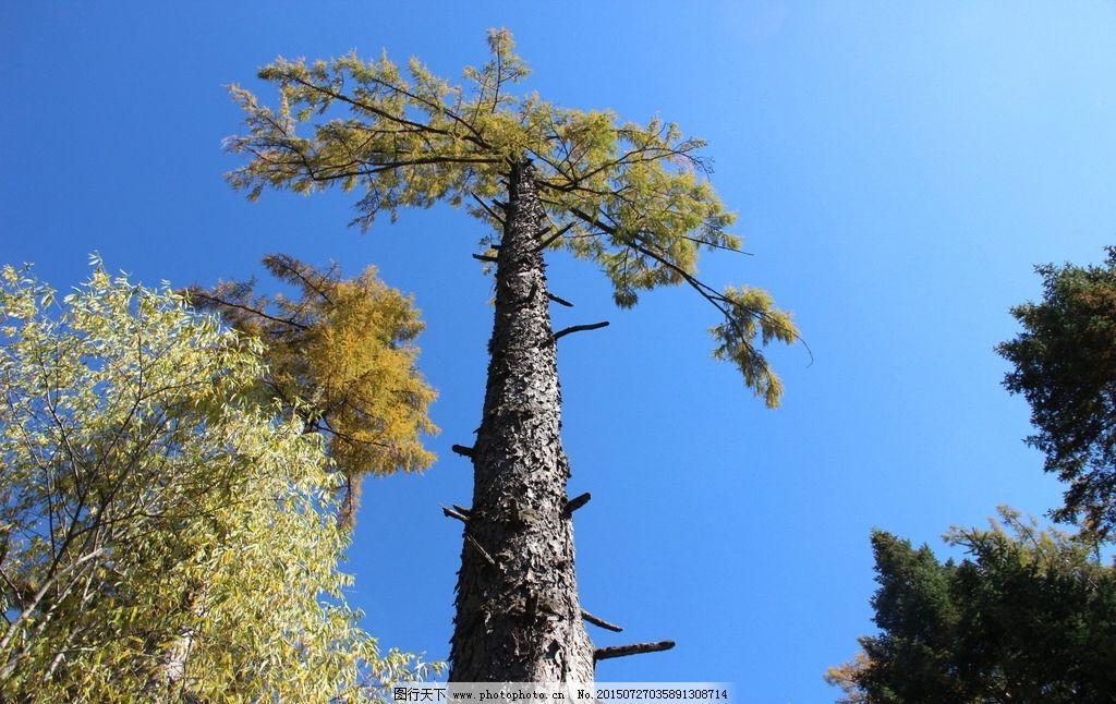 秋天的树木图片