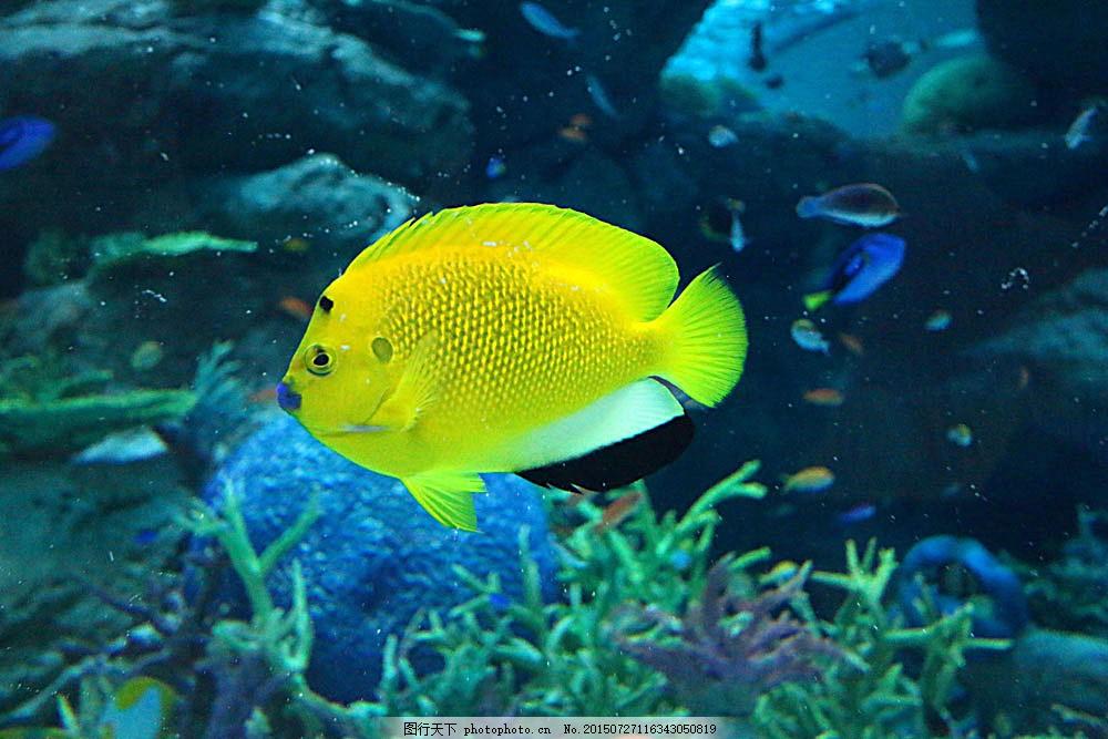 黄色海鱼 海底世界 海洋生物 美丽风景 大海风景 海水 深海 水中生物