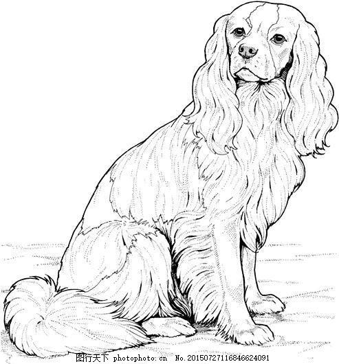 dog 犬科动物 狗 动物素描 动物手绘画 设计素材 动物专辑 素描速写