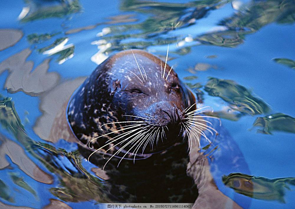 可爱的海豚 动物世界 生物世界 海底生物 大海 水中生物 图片素材