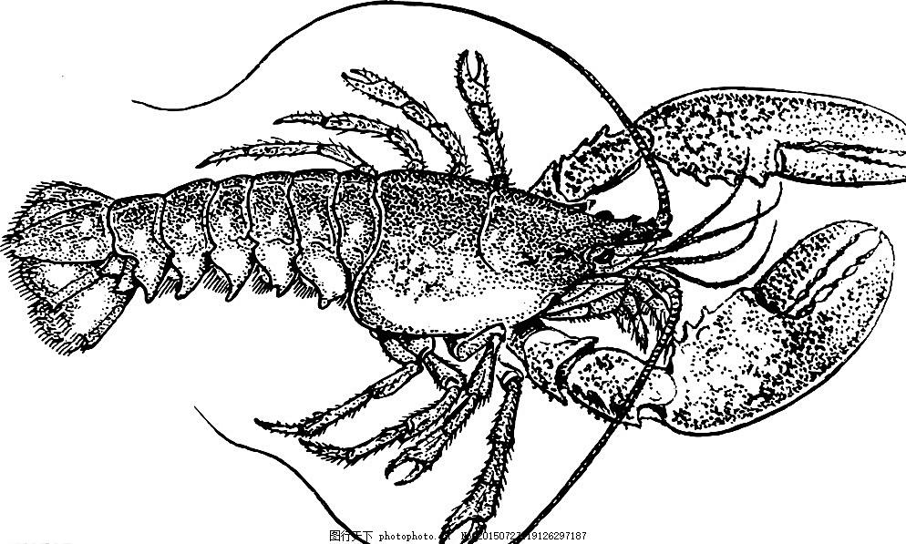 手绘龙虾 澳洲龙虾 澳洲 海鲜 大龙虾 龙虾 澳龙虾 西餐美食 餐饮美食