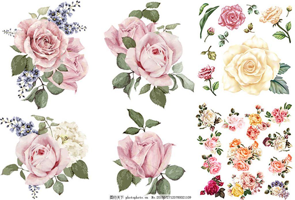 手绘花朵矢量 玫瑰花 复古花朵 花朵鲜花 花卉植物 装饰画 水彩画