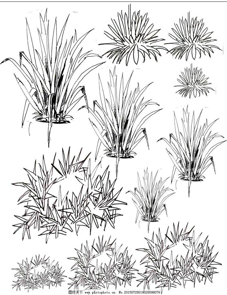 园林手绘植物线稿图片图片