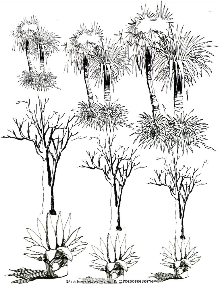 园林手绘植物线稿图片