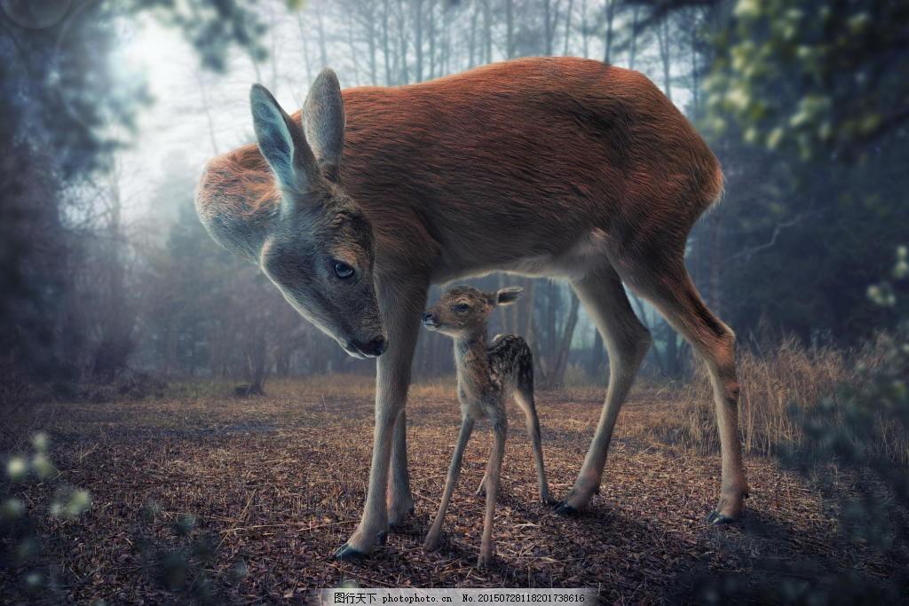 动物鹿背景图片