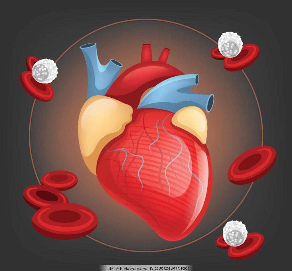 人体心脏器官设计矢量素材 心脏人体器官 结构图 名称 其他生活百科
