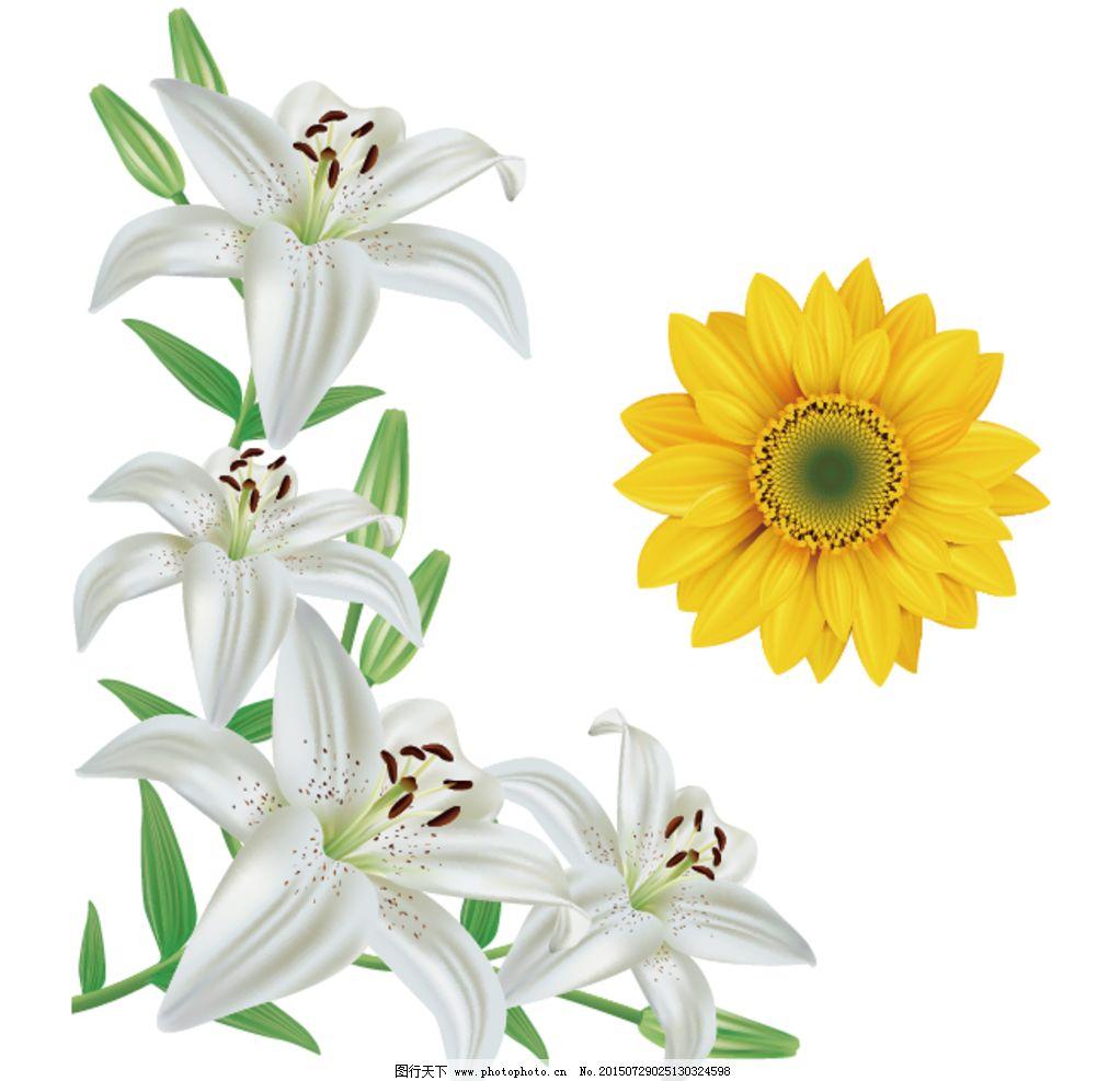矢量百合素材 百合移门 百合图案 白百合 手绘花纹 精美花纹 手绘花朵