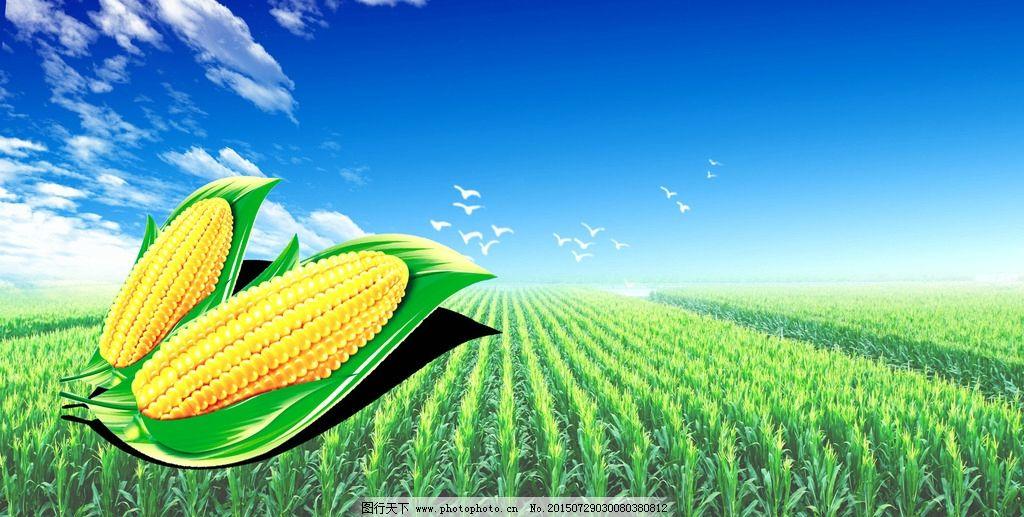 玉米手绘创设情境