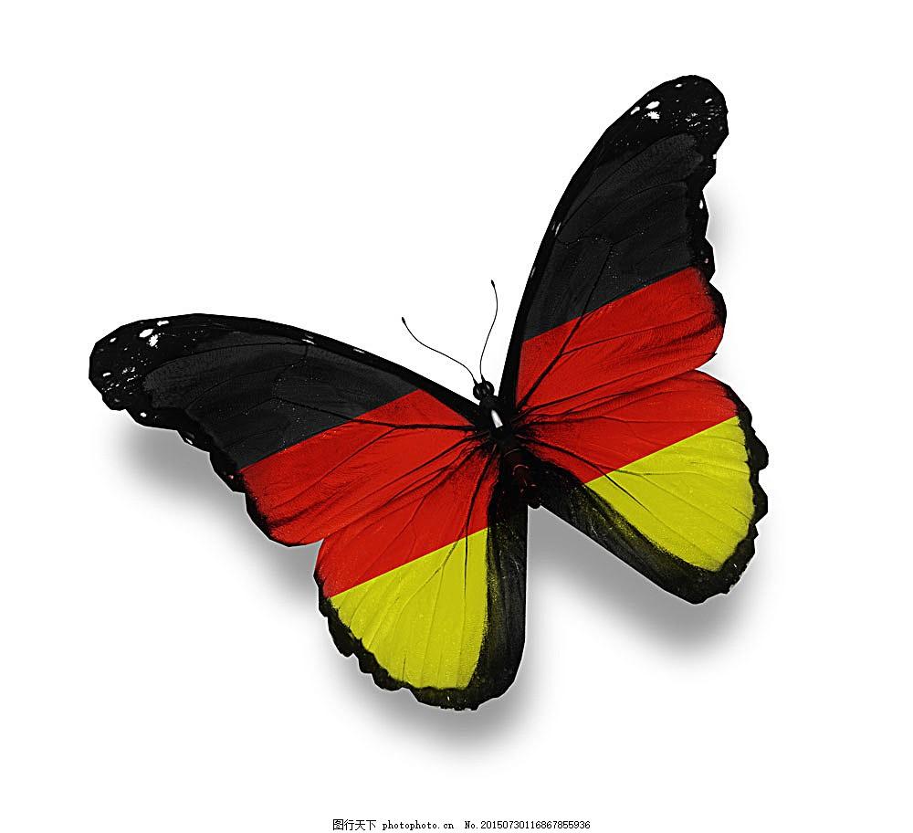 德国国旗蝴蝶 德国国旗 蝴蝶 美丽蝴蝶 蝴蝶标本 动物标本 动物世界