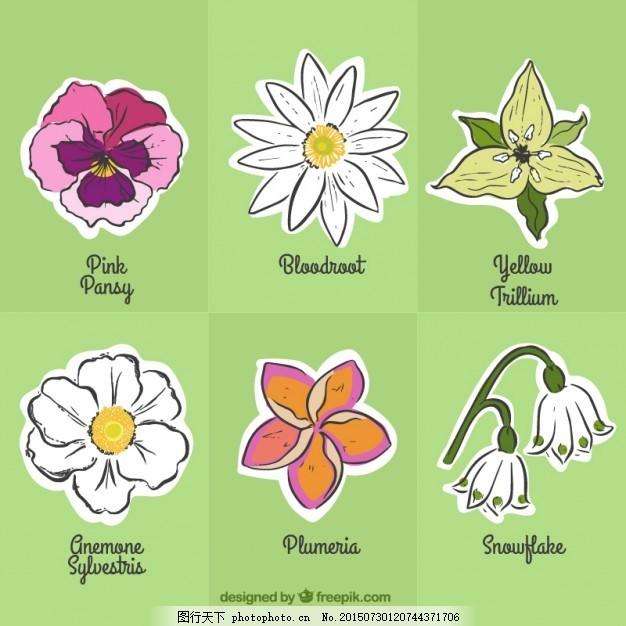 手绘花标签 自然 春天 可爱的植物 绘画 贴纸 春天的花 美丽的画
